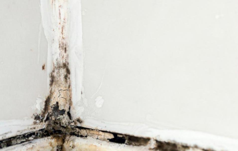 плесень на швах плитки в ванной комнате