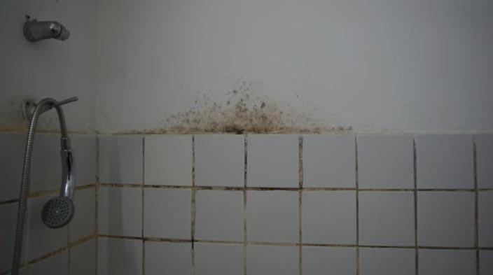 плесень на кафельной плитке
