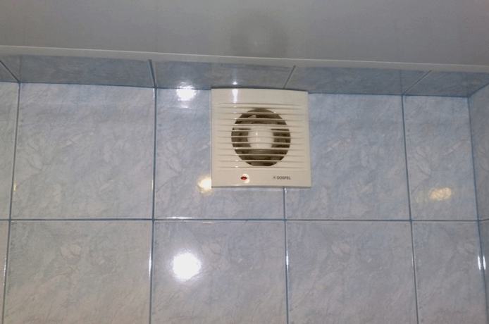 Причины появления плесени в ванной на швах плитки и как избавиться от нее