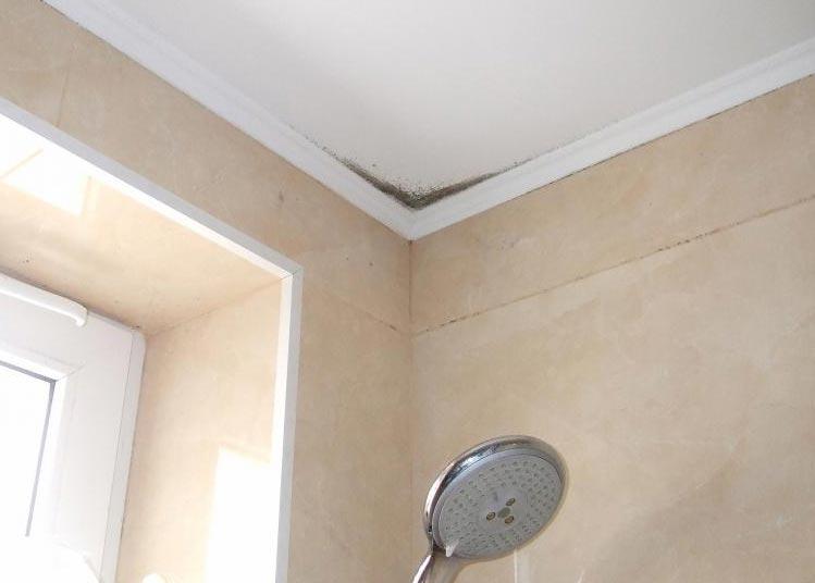 плесень на потолке в ванной